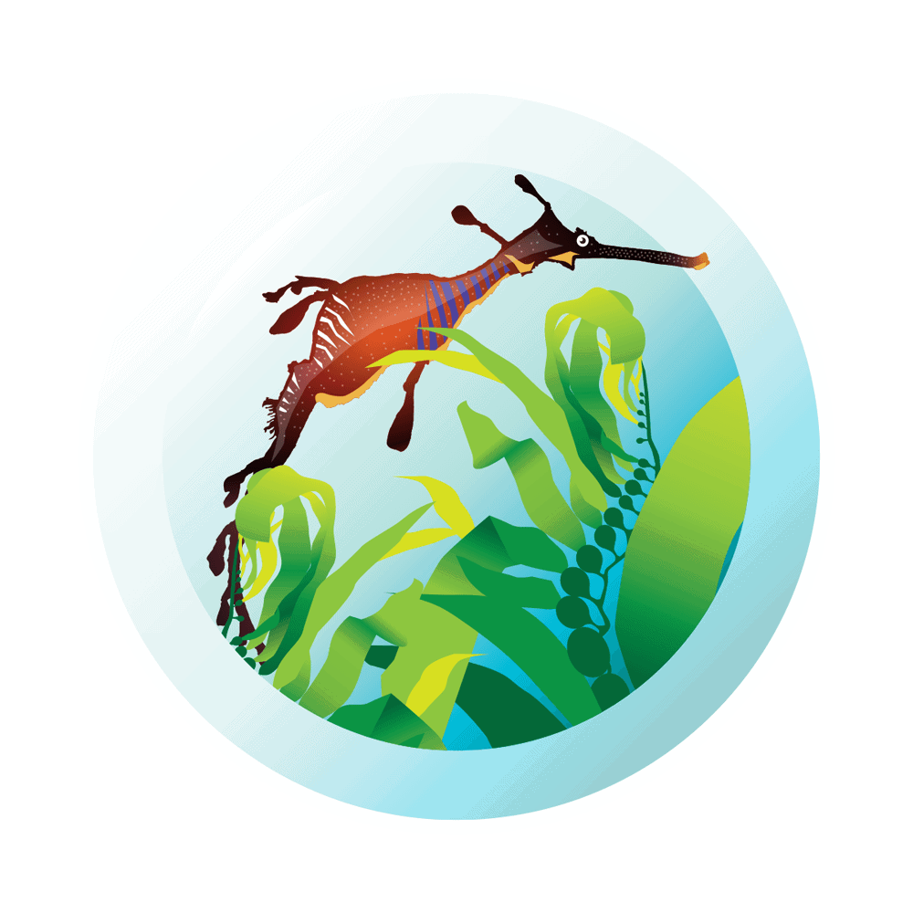 Kelp Restoration Network